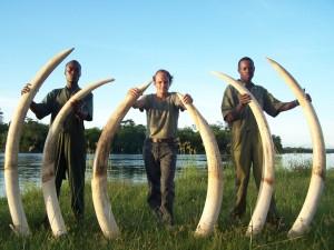 3 Elephants Selous safari chasse tanzanie