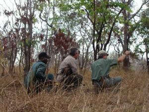 Approche buffle selous safari chasse tanzanie