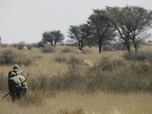 Approche kalahari safari chasse namibie