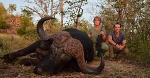 Buffle 2014 safari chasse zimbabwe