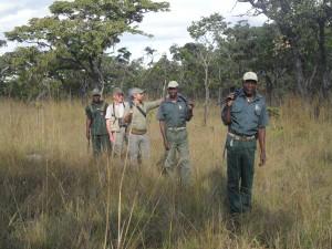 Chasse au buffle caffer safari chasse Mozambique