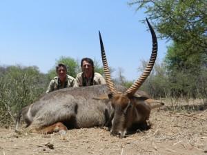 Cobe à croissant Pierre safari chasse Zimbabwe