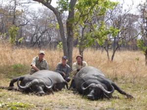 Doublé de caffer safari chasse tanzanie