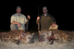 Doublé de hyène safari chasse zimbabwe
