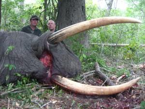 Elephant Philippe safari chasse Mozambique