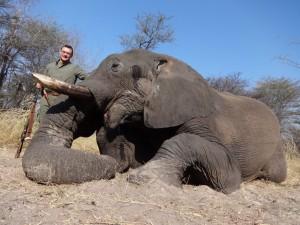 Elephant aout 2014 safari chasse Namibie
