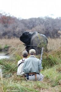 Elephant & jerome latrive safari chasse tanzanie