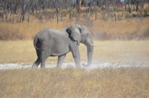 Elephant safari chasse en Namibie