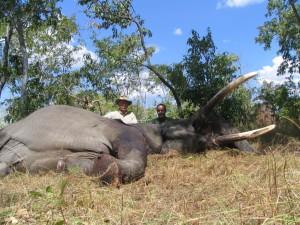 Elephant selous safari chasse tanzanie