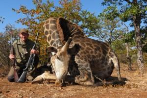 Girafe Vincent safari chasse zimbabwe
