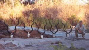 Grands koudous JML SAFARIS TANZANIE
