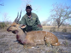 Guib sylvatique & Athumani safari chasse tanzanie
