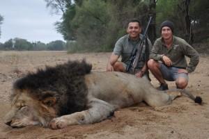 Lion 2013 safari chasse Zimbabwe