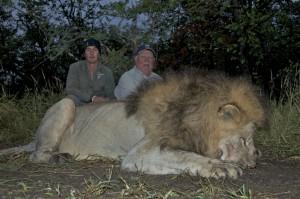 Lion Bubye safari chasse Zimbabwe
