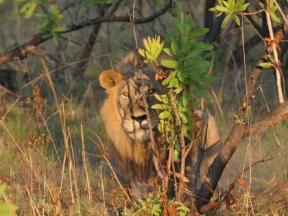 MOZAMBIQUE Safari grande chasse