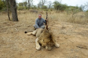 Lion SB safari chasse zimbabwe