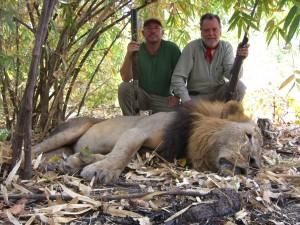 Lion safari chasse Mozambique