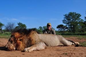 Lion shaun safari chasse zimbabwe
