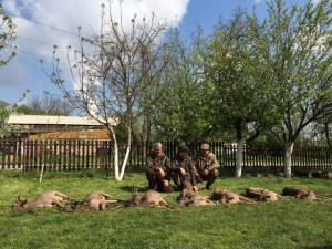 Matinée de chasse aux brocards en Serbie