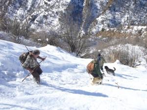 Pistage sangliers Tadjikistan