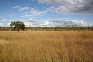 Safari chasse Juin Mozambique