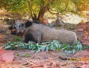Sanglier TS Tadjikistan