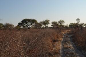 biotope Khaudum safari chasse namibie