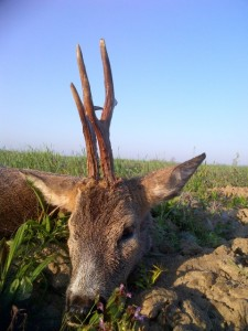brocard sérré chasse serbie