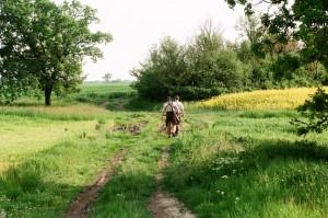 chasse a l approche au brocard en serbie