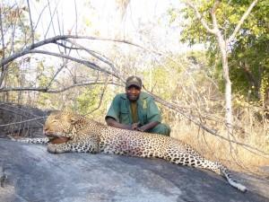 léopard olivier safari chasse tanzanie