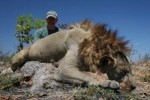 lion rungwa safari chasse tanzanie