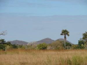 paysage kilwa safari chasse tanzanie