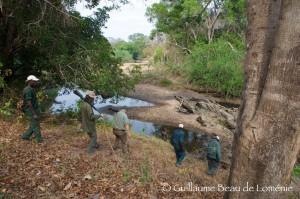 pistage safari chasse Mozambique ©GBL