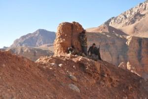 Affut ibex Kirghizstan