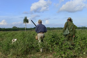Ambiance chasse à Cuba