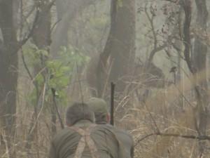 Approche Buffle Jerome LATRIVE safari chasse cameroun