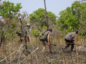Approche Eland de Derby safari chasse Cameroun