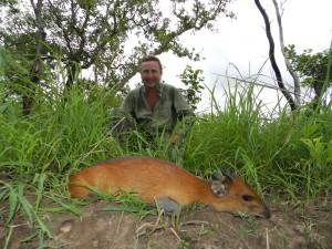 Céphalophe à flanc roux Thierry safari chasse Cameroun