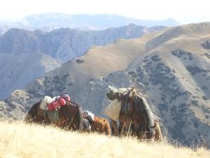 Chevaux au repos Kirghizstan