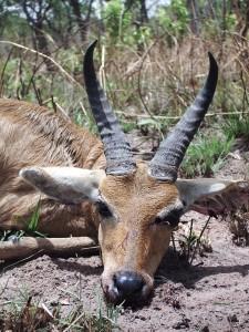Cobe Redunca Faro safari chasse Cameroun