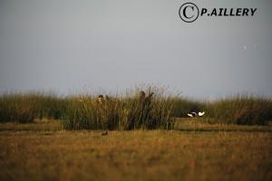 Copyright P.Aillery Poste de chasse