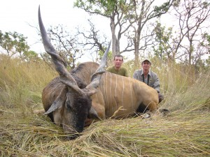 Eland de Derby DC et J LATRIVE safari chasse Cameroun