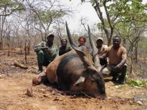 Eland de Derby et Franck Bajard safari chasse Cameroun