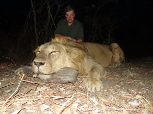 Lion 2014 Faro safari chasse Cameroun