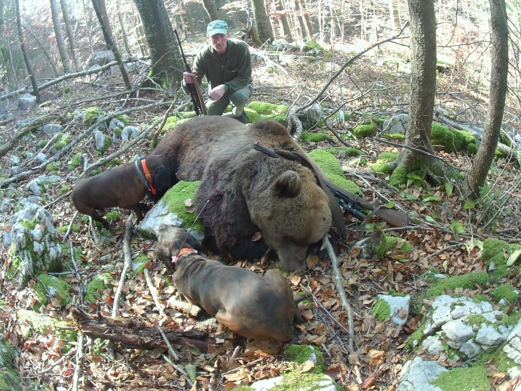 chasse croatie sanglier
