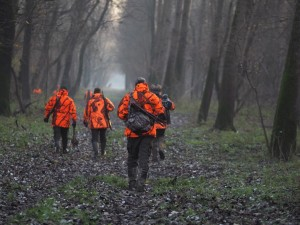 Postés chasse en battue en Croatie