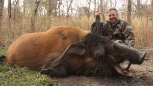Potamochère Jarry Vina safari chasse Cameroun