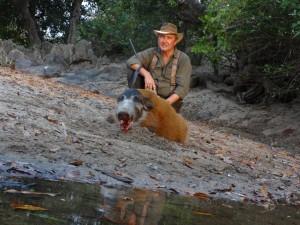 Potamochère Thierry safari chasse Cameroun