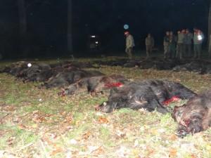 Tableau de chasse en Croatie en battue