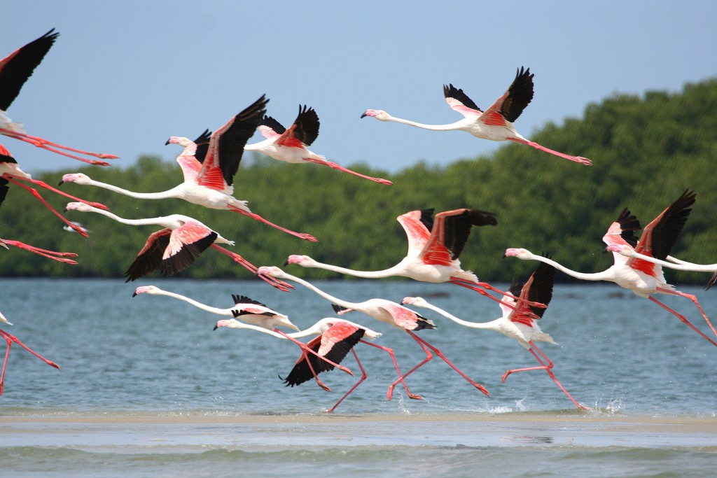 flamands roses guinee bissau jigging popper